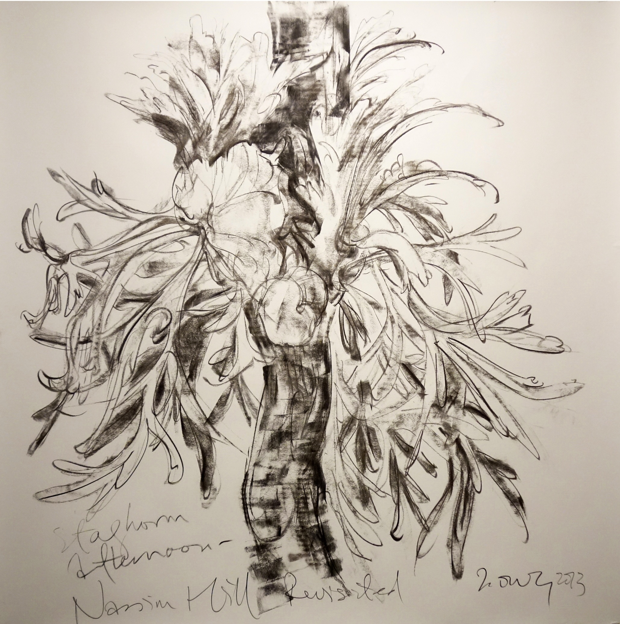 Staghorn Afternoon  2013 Charcoal on paper approx. H117 x W115 cm