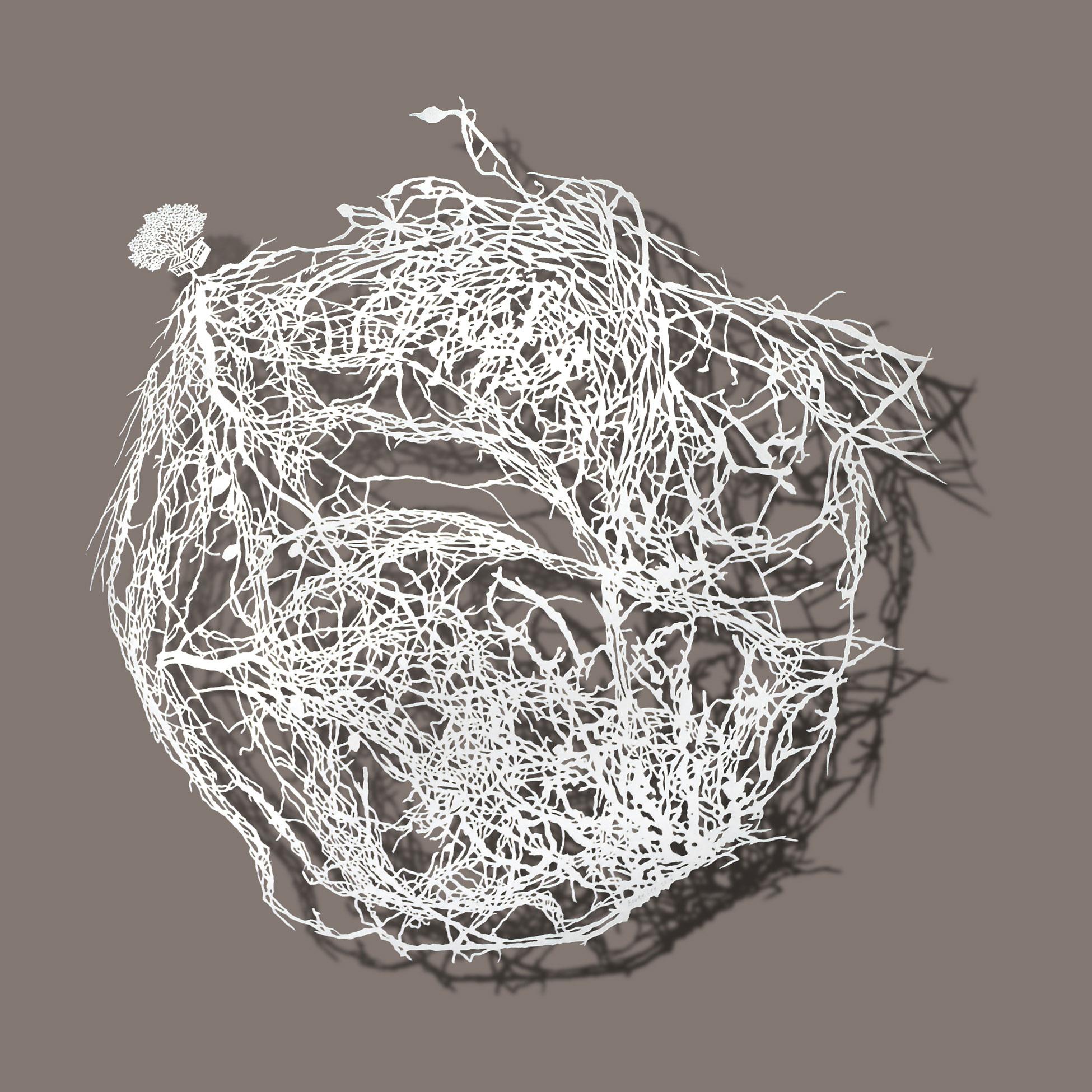 Roots  2014 Cut paper 51 x 51 cm