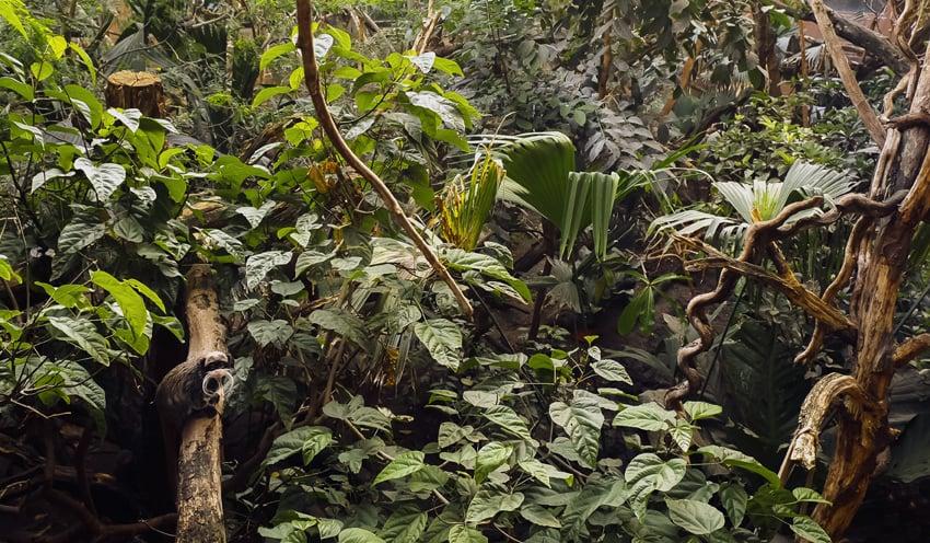 Donna ONG  My Forest Has No Name (xxx)  2016 Diasec print H35 x W60 cm Photography © Fotograffiti (John Yuen),Eric Tschernow and Jason Lau