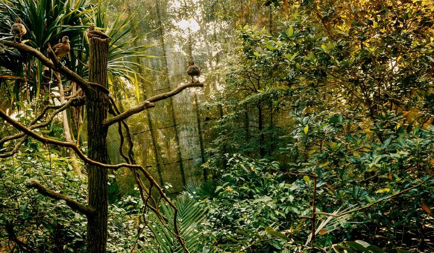Donna ONG  My Forest Has No Name (xxxiv)  2016 Diasec print H35 x W60 cm Photography © Fotograffiti (John Yuen),Eric Tschernow and Jason Lau