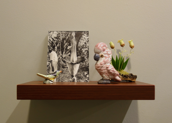 Donna ONG  Postcards from the Tropics (x)  2016 Diasec print, wooden shelf, and tropical souvenirs (clay pitcher plant on wood, antique ceramic parrot and vintage miniature ceramic bird) Dimensions variable