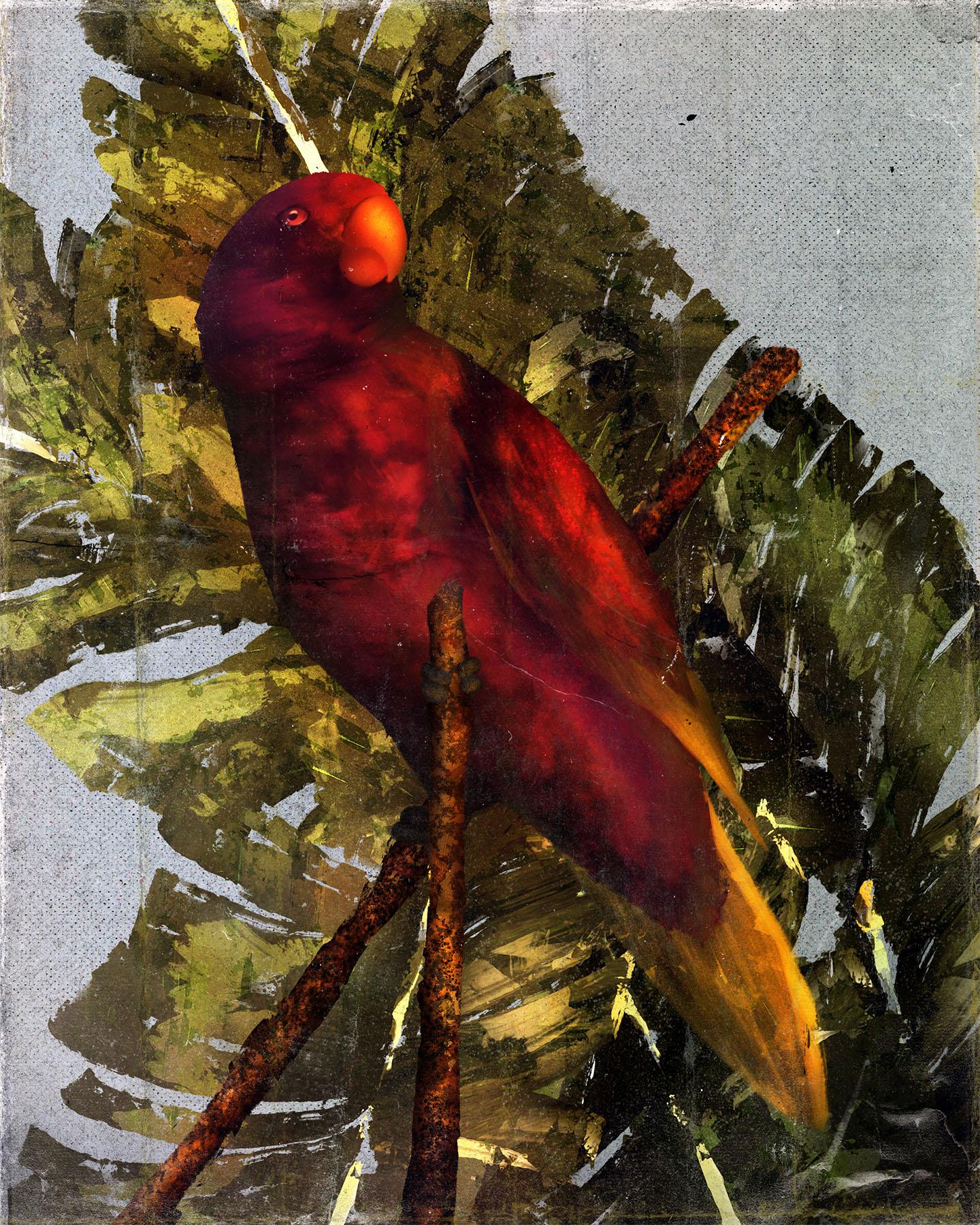 Animals_Pohnpei Lorikeet_Trichoglossus rubiginosus_Illustration_Julie Smits.jpg