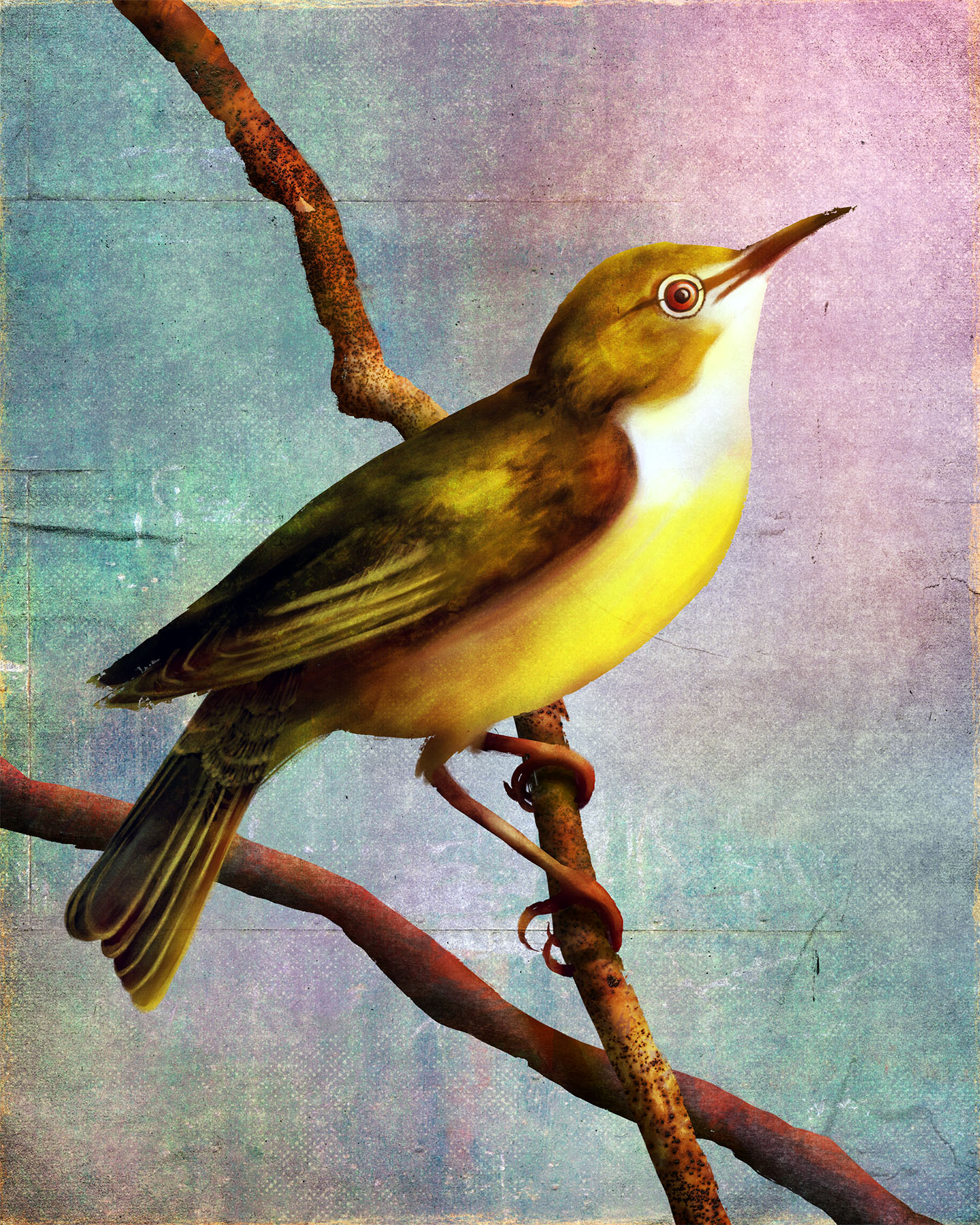 Animals_Long-Billed White-Eye_Rukia longirostra_Illustration_Julie Smits.jpg