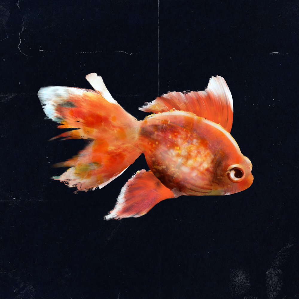 Julie Smits_Goldfish_Illustration.jpg