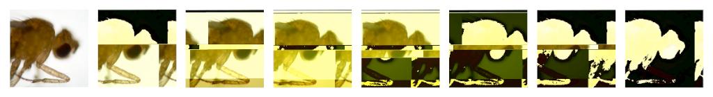 evoline2flat.jpg