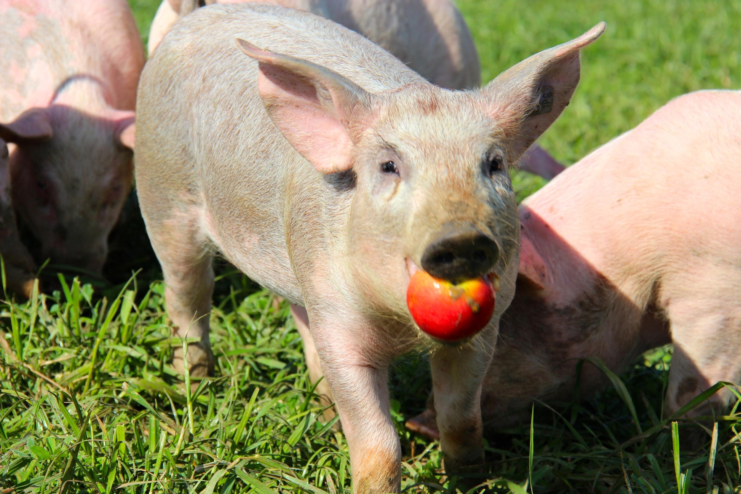 Aldora ist die schnellste wenn es Äpfel gibt..