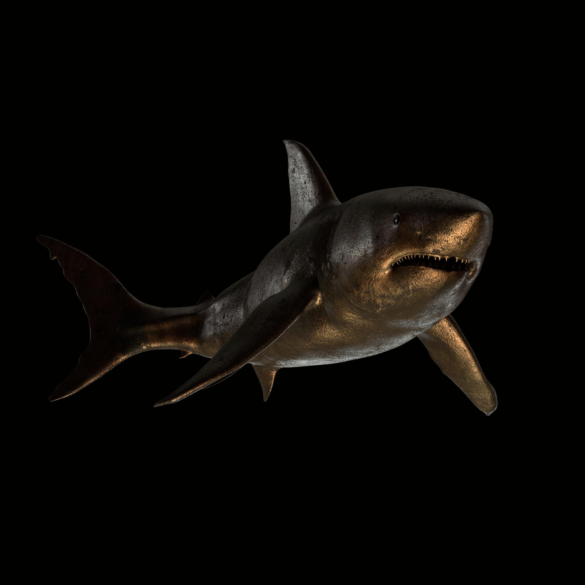 PAN_Shark_WIP01.jpg