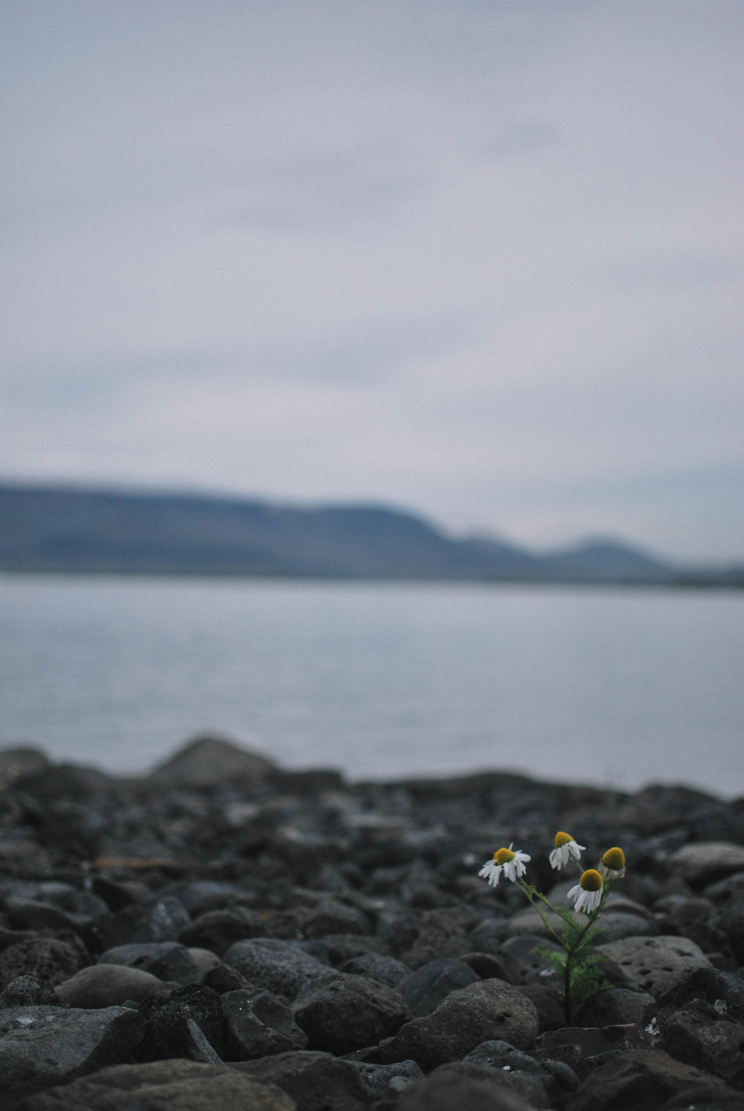 IcelandDay1_IW (7).JPG