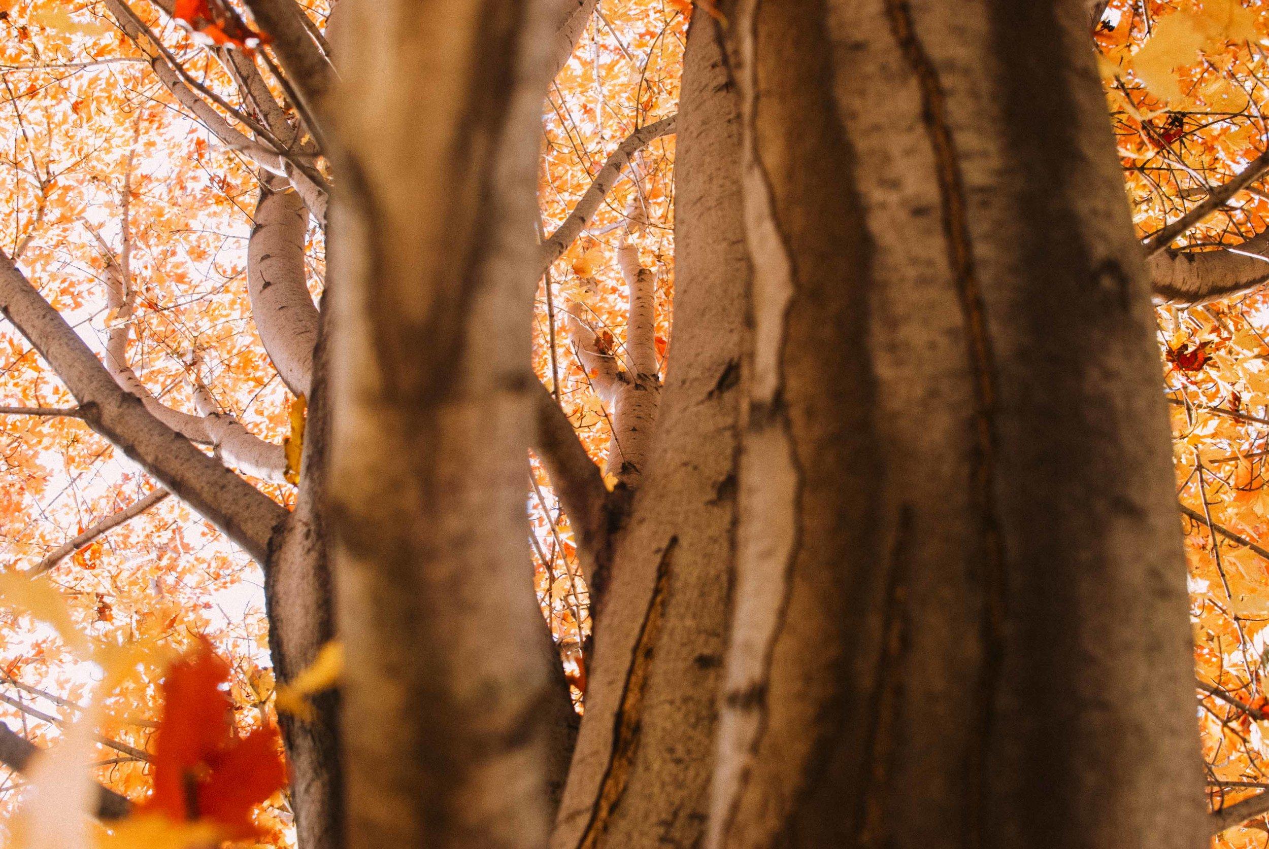 Fall Colors, Minneapolis, MN 2013