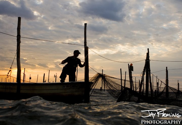 Fishing a Pound Net out of Rock Hall. Upper Chesapeake Bay, Maryland