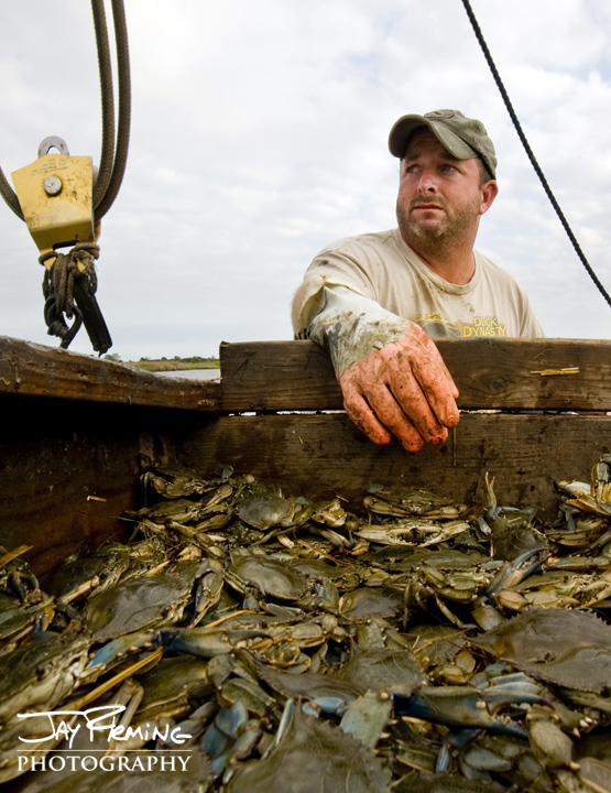 Deal Island waterman Andrew Benton fishes bank traps in the marshes of Somerset County during Maryland's crabbing season