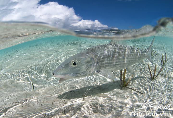 Bonefish flats patrol. Brigantine Cays
