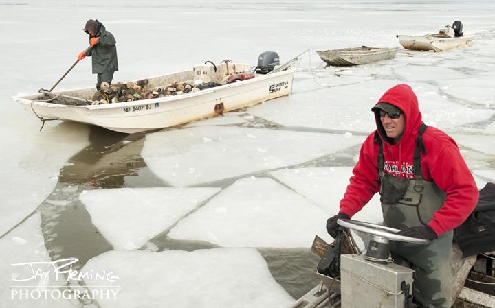 Breaking ice to haul seine. Choptank River, Maryland