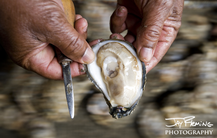 Northern Neck of Virginiashucker. Bevans Oyster Company, Virginia