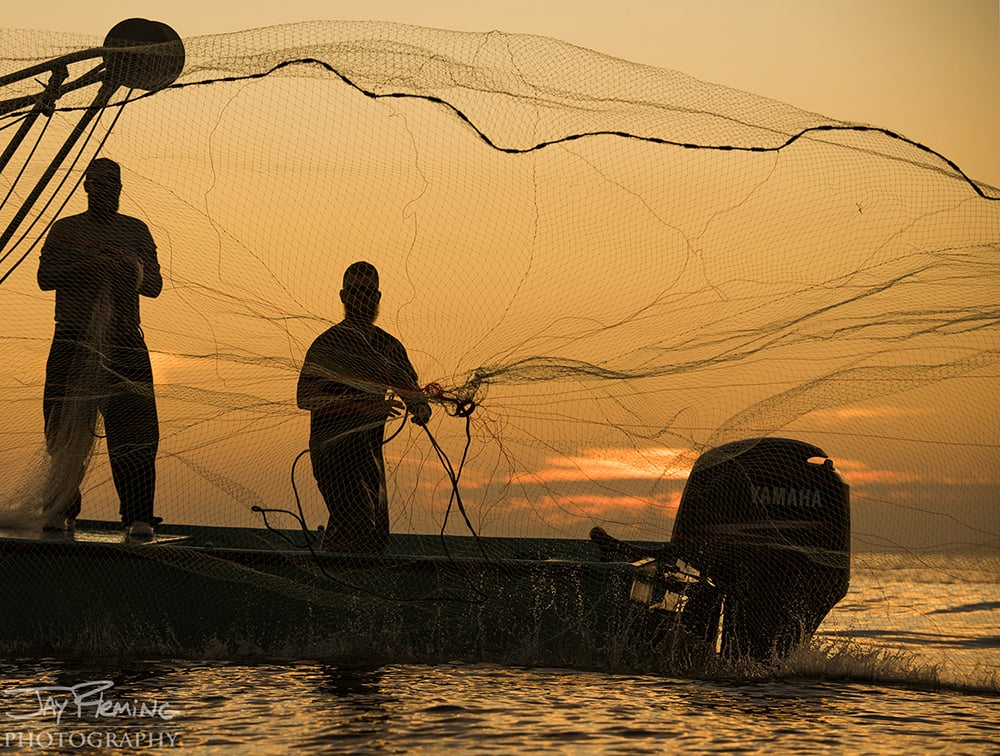 Throwing a cast net in the Gulf of Mexico for Striped Mullet during their winter spawning run.