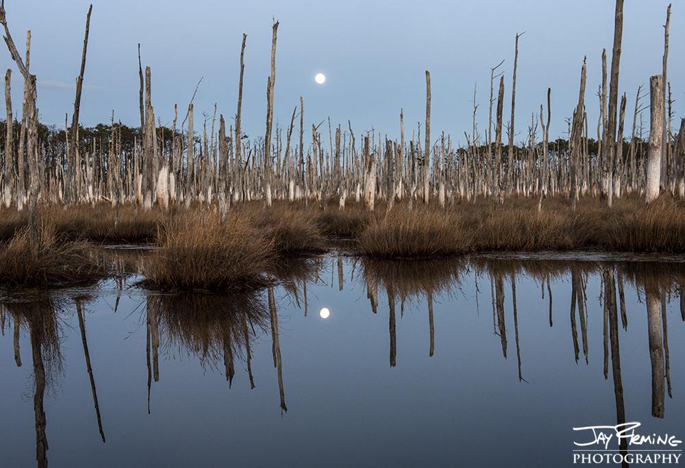 Moonrise over a tidal pond in Blackwater National Wildlife Refuge. Crapo, Maryland