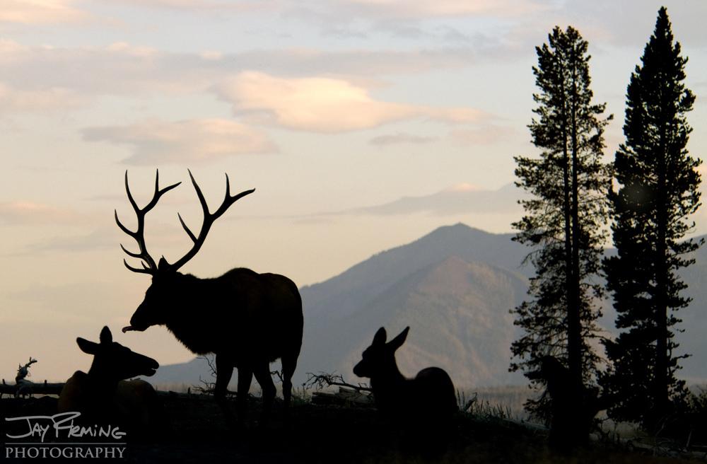Yellowstone Portfolio © Jay Fleming 06.jpg