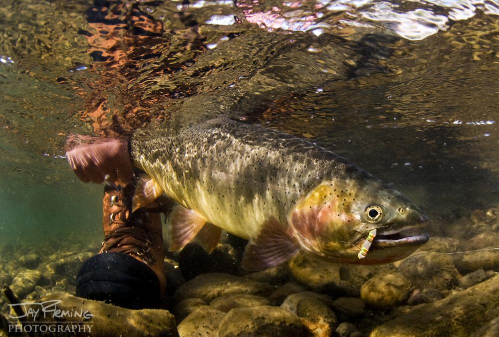 Yellowstone Portfolio © Jay Fleming 09.jpg