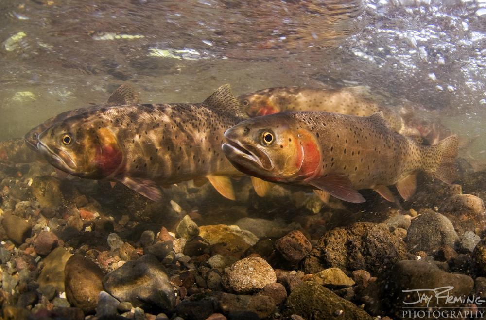 Yellowstone Portfolio © Jay Fleming 26.jpg