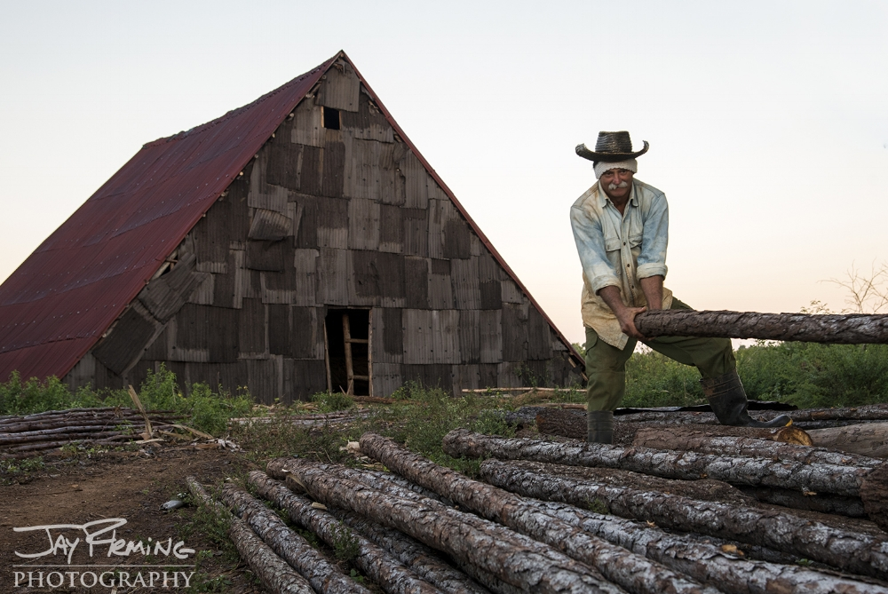 Diego Barrio prepares logs used for racks that hold tobacco leaves during the drying process. Puerto Esperanza