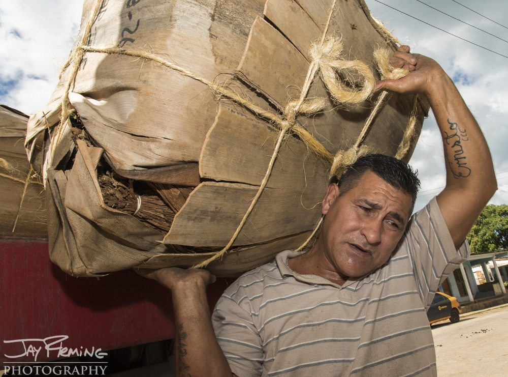 A laborer for a government run tobacco sorting facility unloads packages of tobacco that were purchased from a farm outside of Puerto Esperanza. Tobacco leaves are packed into packages made from Royal Palm bark - acting as a natural humidor.