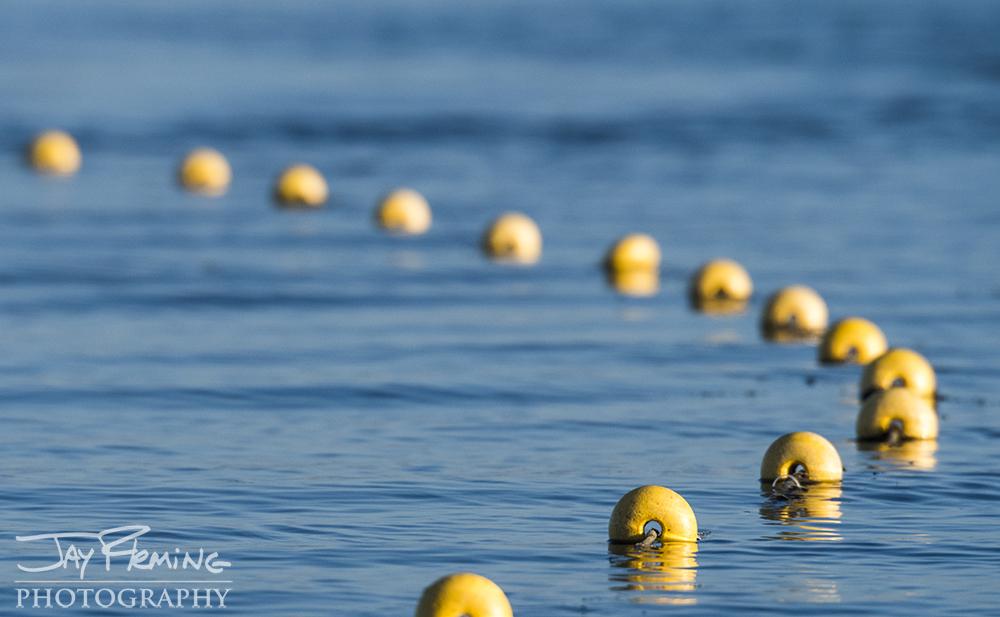 Gill net buoys on Laguna del Tesoro