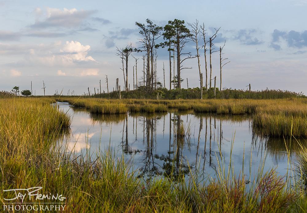 Hoopers Island© Jay Fleming11.jpg
