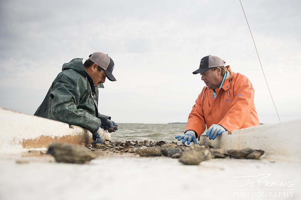 Hoopers Island Oyster © Jay Fleming15.jpg