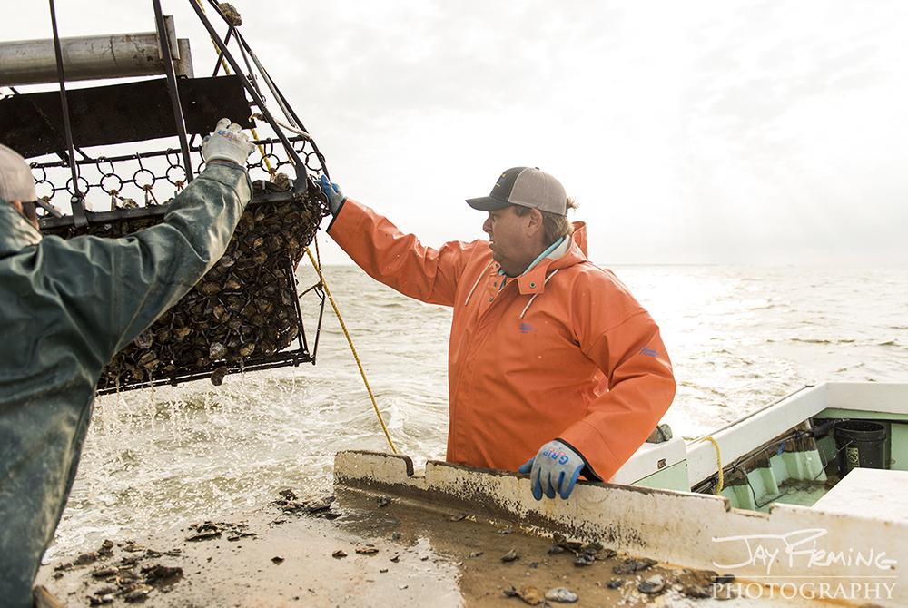Hoopers Island Oyster © Jay Fleming14.jpg