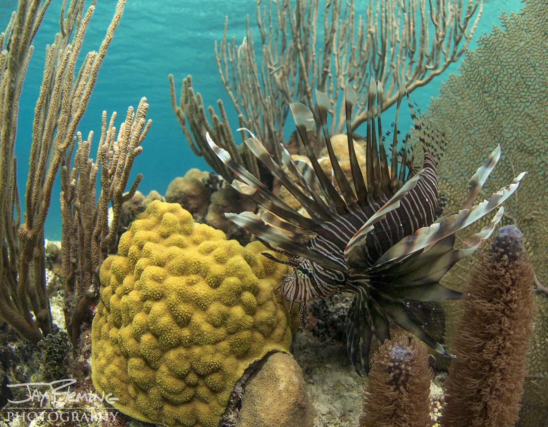 Fisheries © Jay Fleming06.jpg