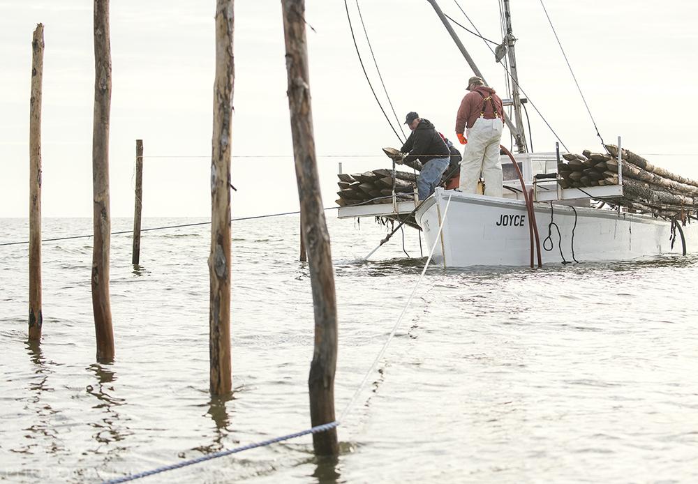 Reedville Pound Net Pole Setting © Jay Fleming  -  12.jpg