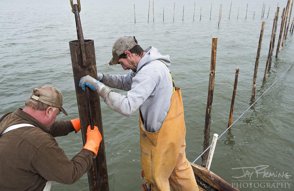 Reedville Pound Net Pole Setting © Jay Fleming  -  04.jpg