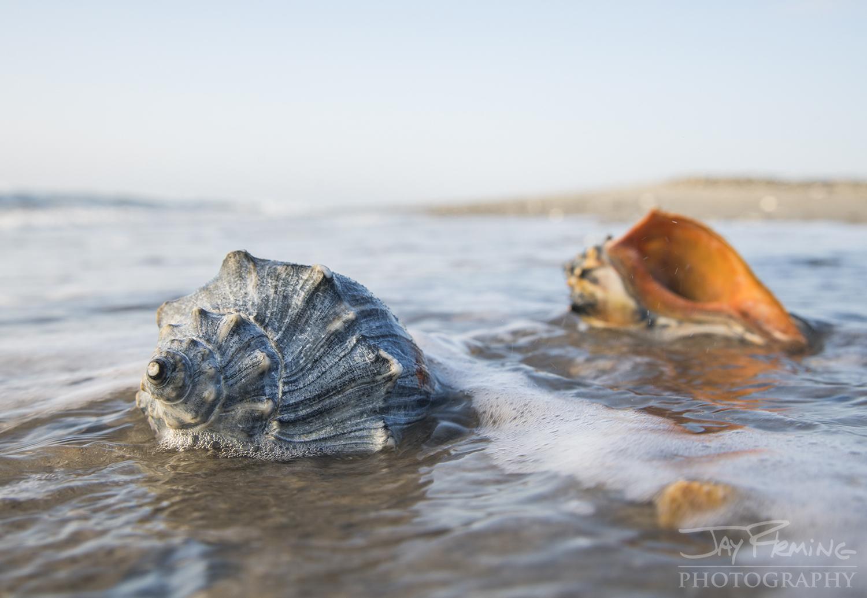 Seaside Paddle © Jay Fleming007.jpg