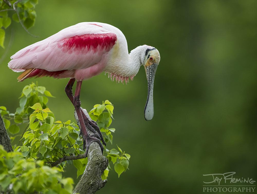 Louisiana  © Jay Fleming 04.jpg