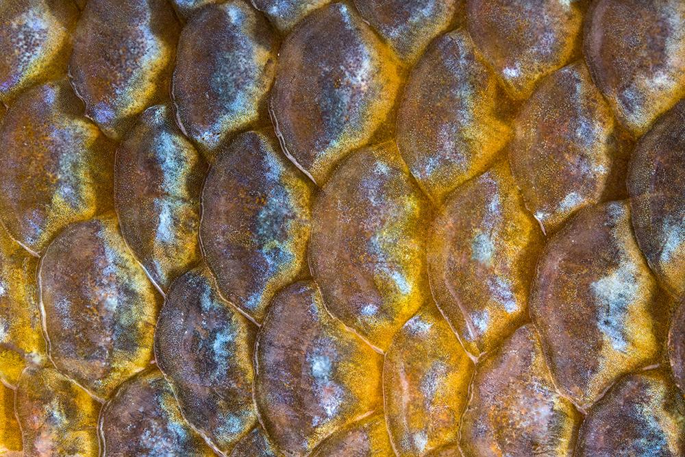 Fish Details © Jay Fleming 01.jpg