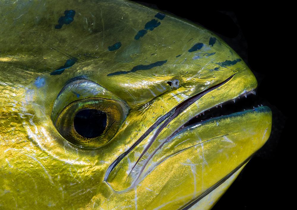 Fish Details © Jay Fleming 04.jpg