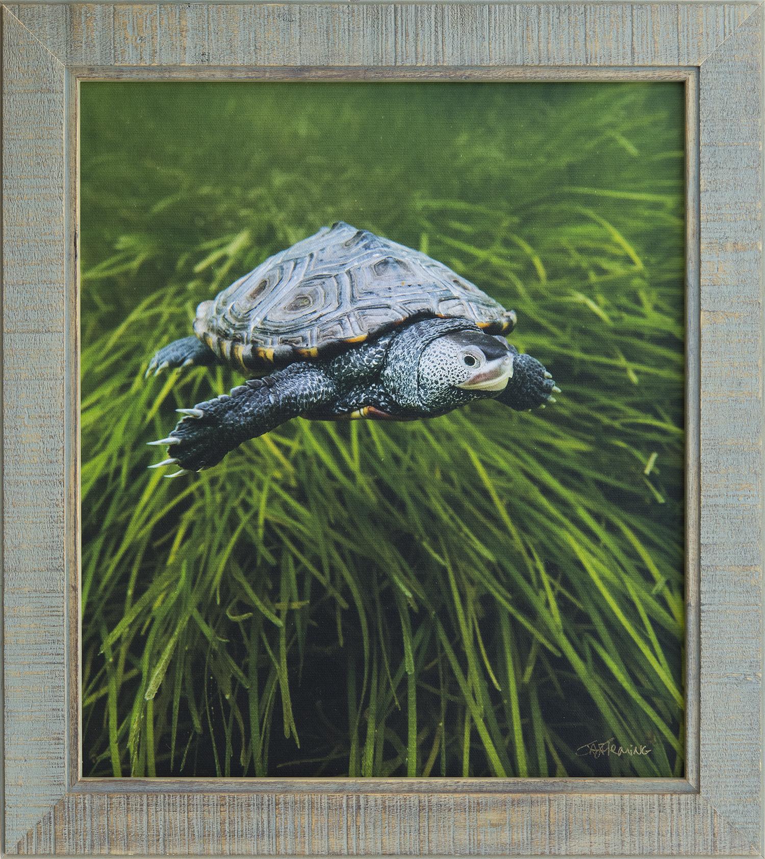Custom Framed Canvas Print- © Jay Fleming10.jpg