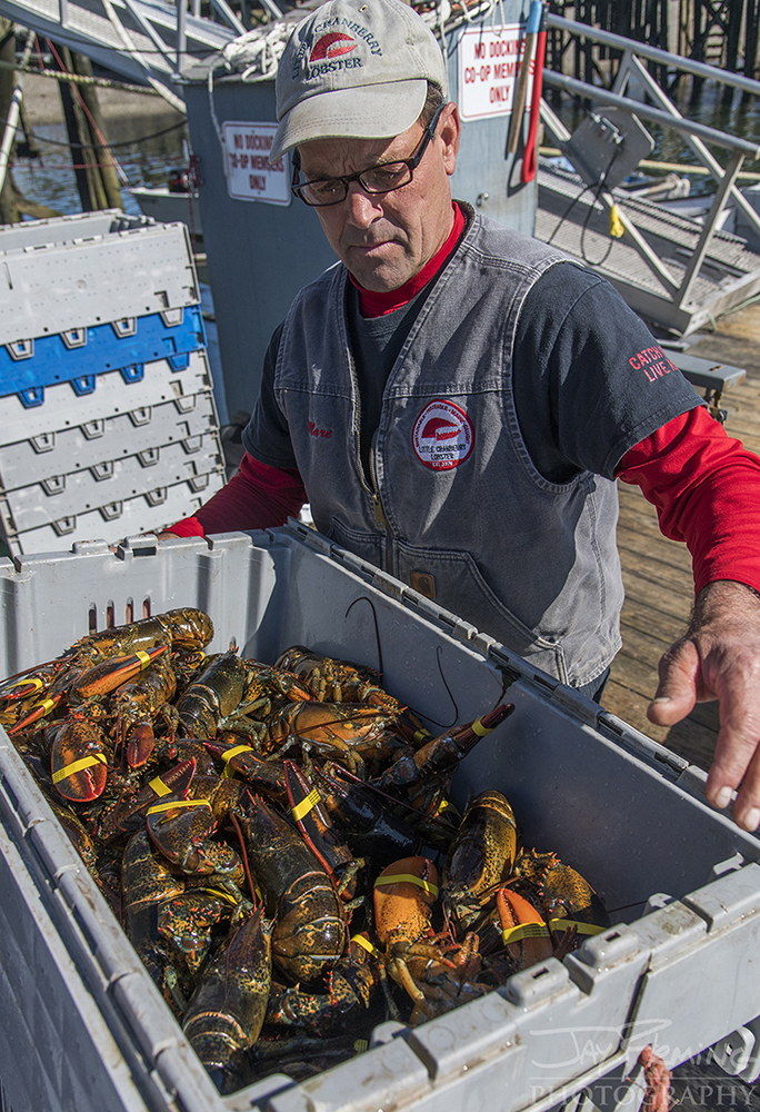The holding containers can house up to 90 pounds of live lobsters. These are stored in the water to keep the lobsters alive.