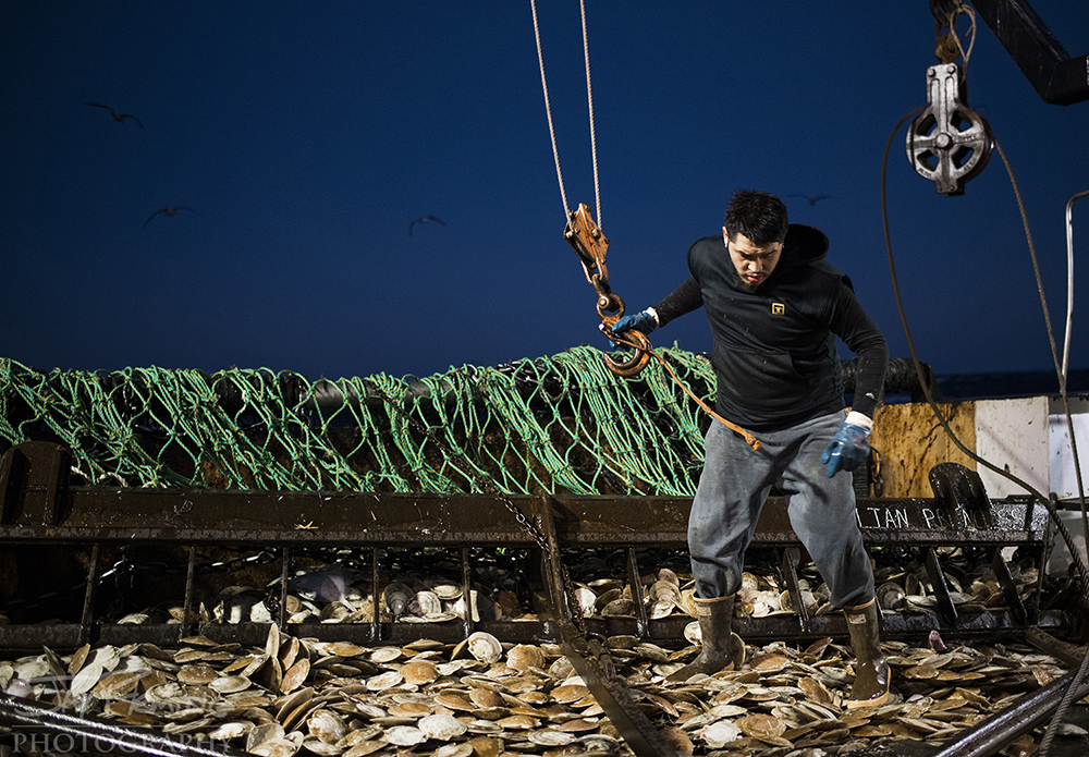 Scallop Industry © Jay Fleming - 11.jpg