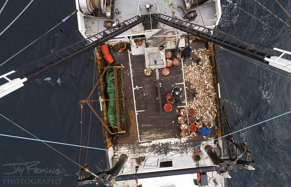 Scallop Industry © Jay Fleming - 01.jpg