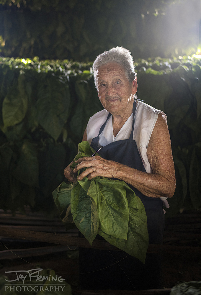 Anna Gloria Prieto, 86 years old, strings tobacco leaves in the Lopez family tobacco barn.