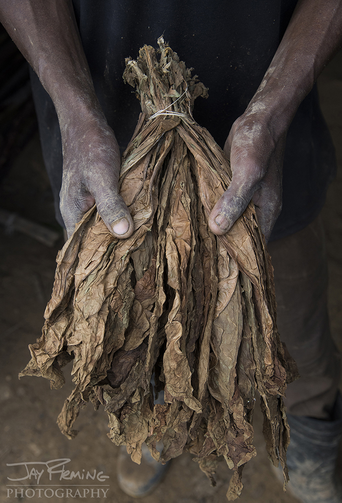 A bundle of dried tobacco ready to be purchased by a sorting facility.