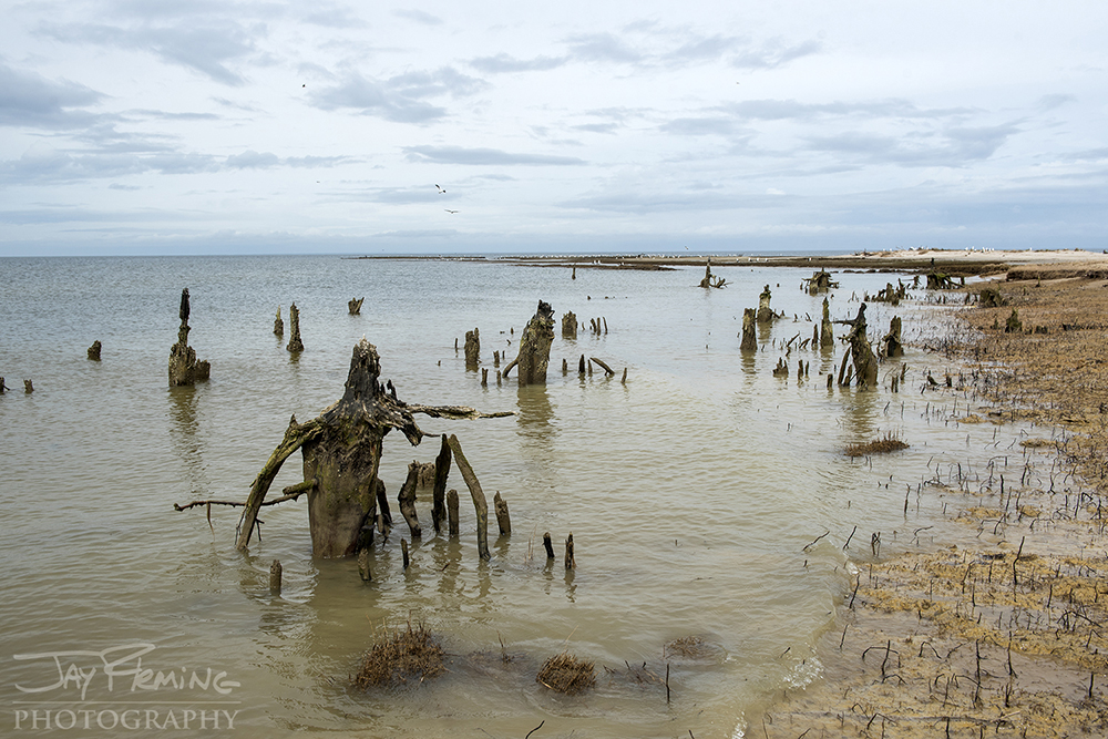 Watts Island Virginia Jay Fleming