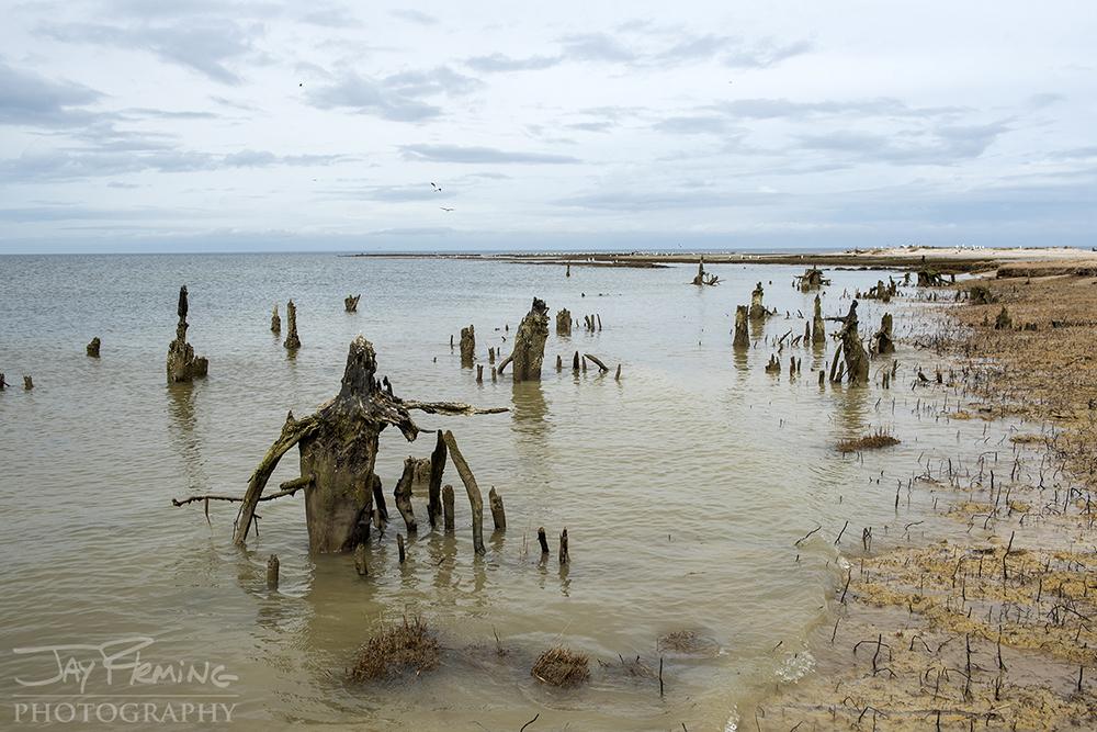 Low tide reveals stumps of fallen trees on the northwestern shoreline of Watts Island.