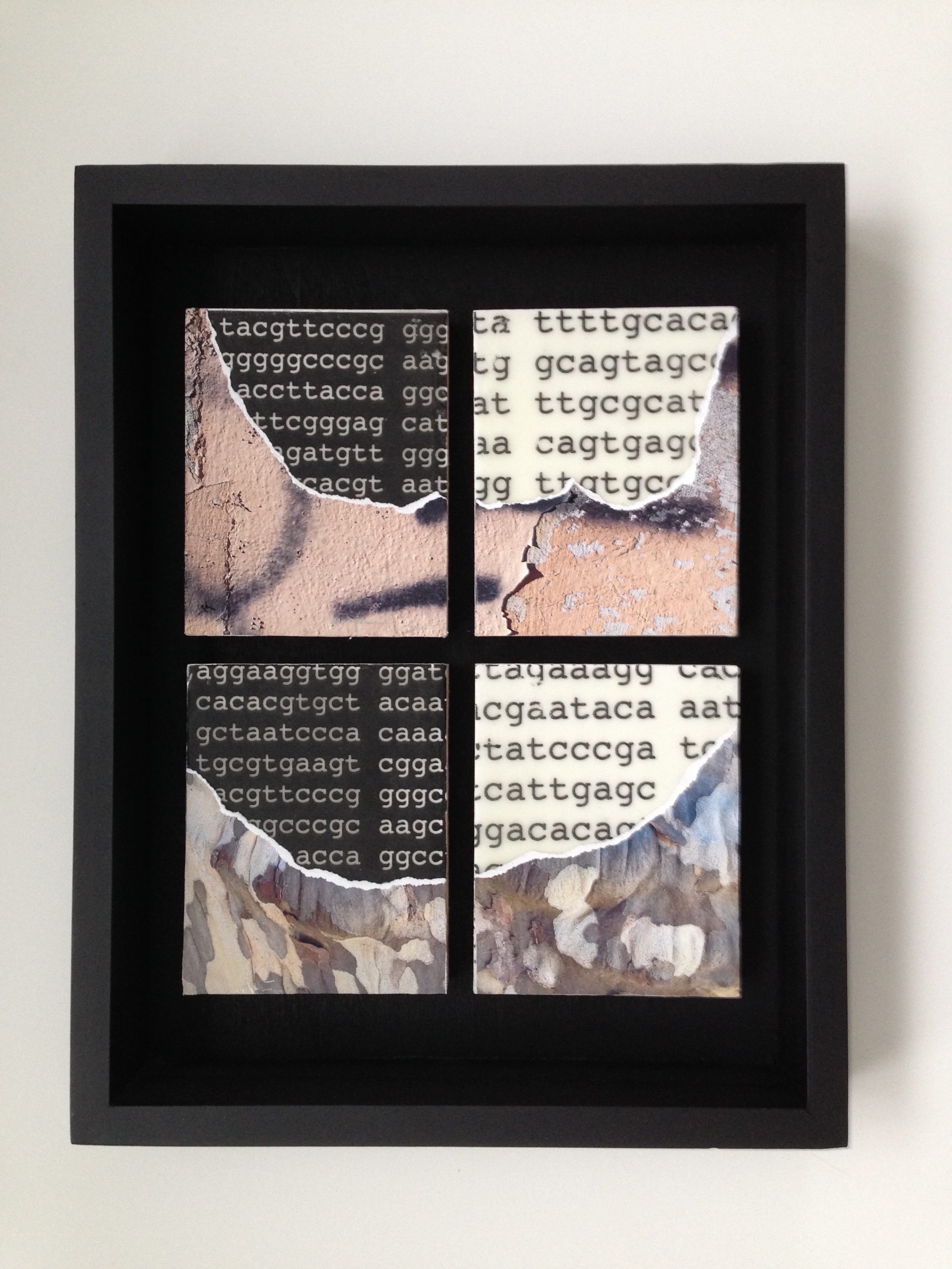 Untitled (Reveal), 2017, Collage & transfer on wood, 14 x 11 x 2 inch framed.