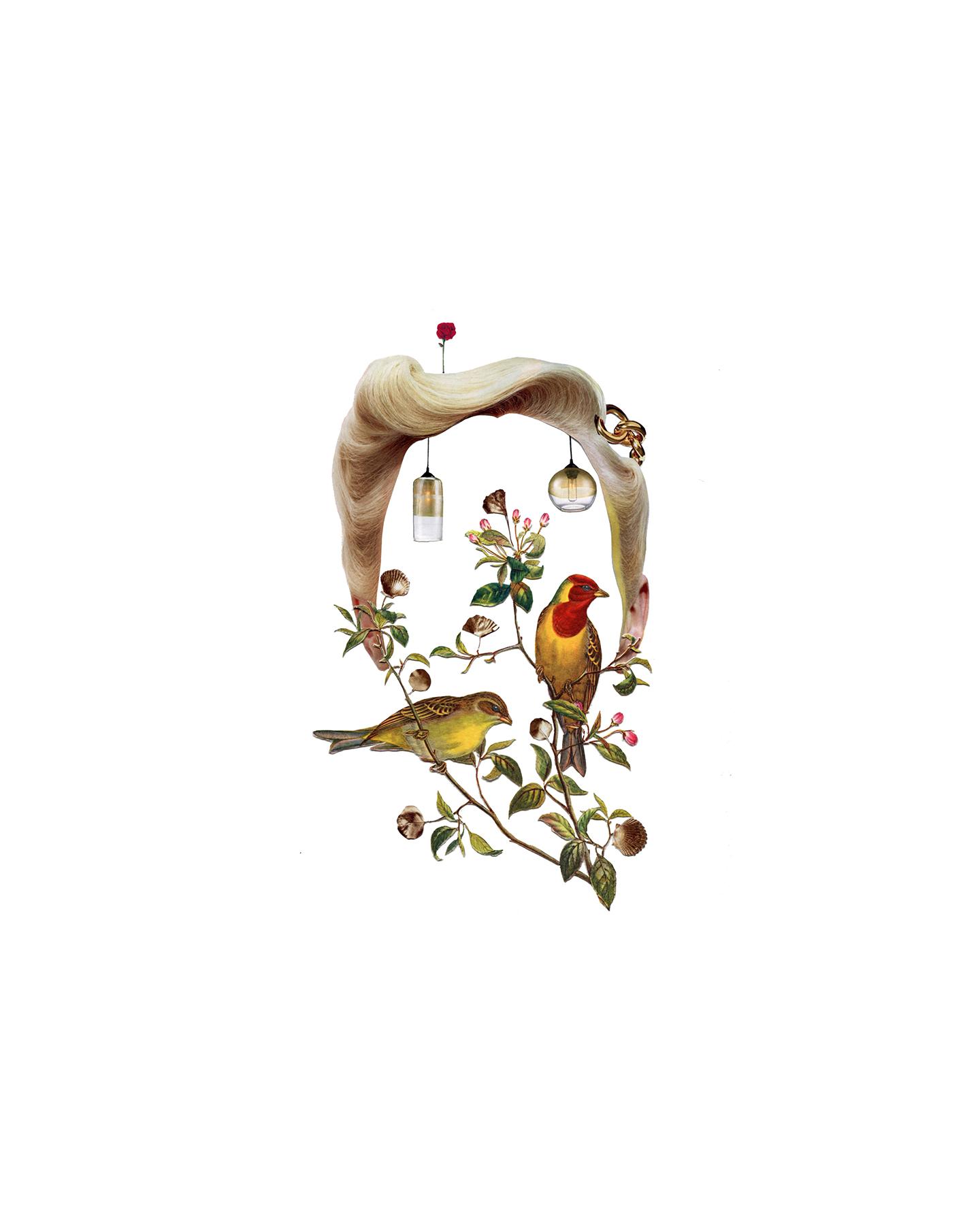 Tatiana Flis,  Birdbrain , Collage, 16x20