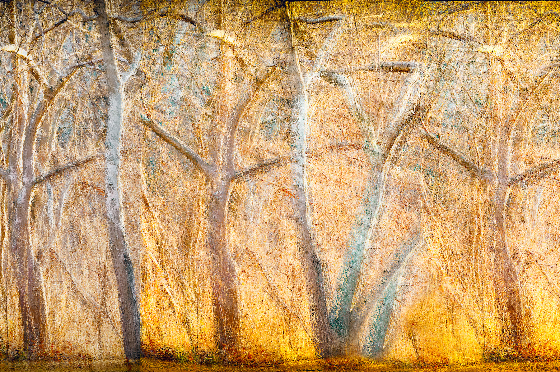 Linda DeStefano Brown,  Shimmering LIght,  Digital photograph, 24x18