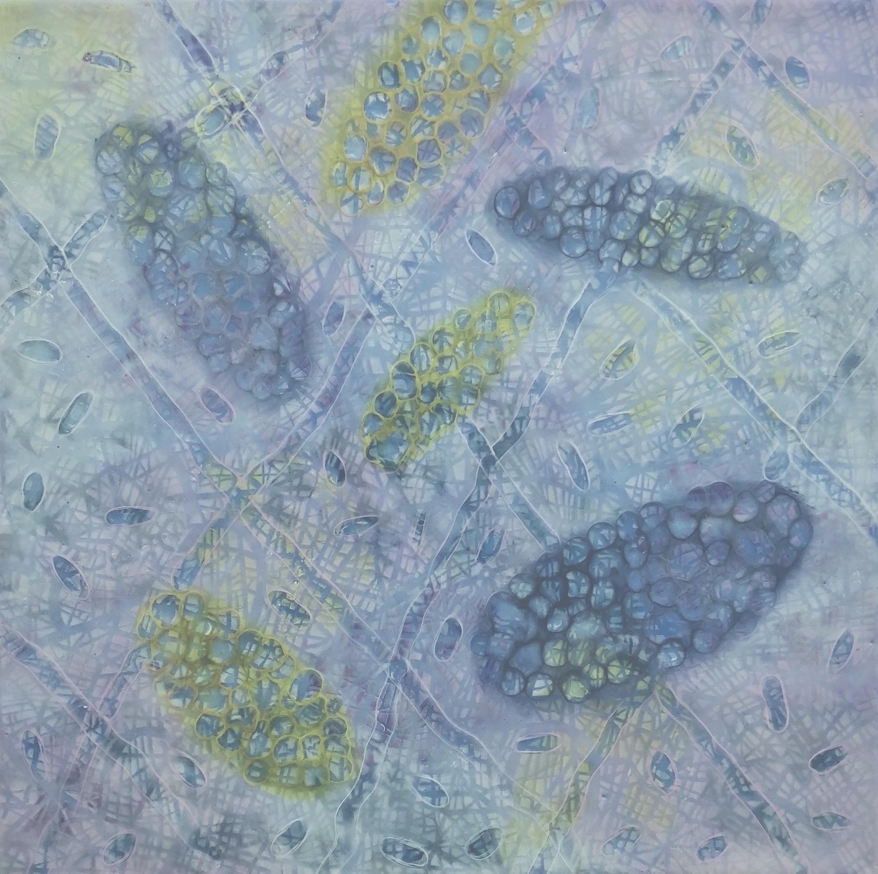 """Bio Patterns 8 , encaustic and pastel, 20"""" x 20"""""""