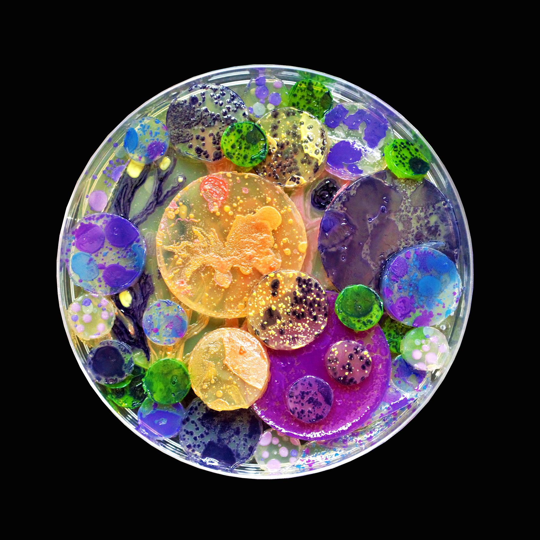 Penil Cobo,  Remainders , Microbes in agar