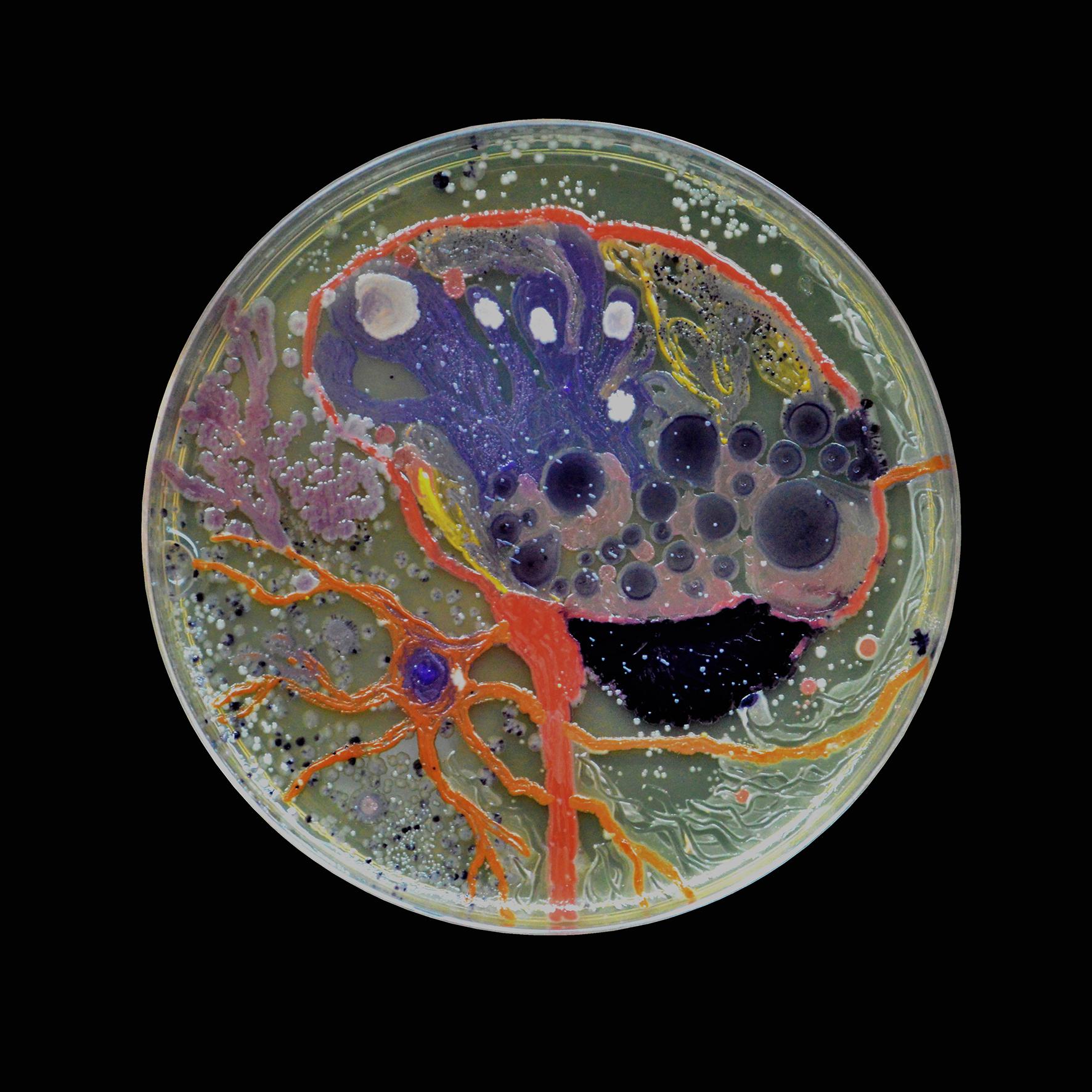 Penil Cobo,  Brain Matter 4 , Microbes in agar